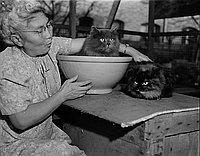 [Mrs. Sakai and cats, February 17, 1950]