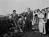[Cherry tree planting at Exposition Park Rose Garden at Exposition Park, Los Angeles, California, February 1958]