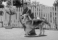 [Kabuki actor Utaemon Nakamura meets Rin-Tin-Tin and Old Yeller at Frank Barnes' house, Los Angeles, California, July 2, 1960]