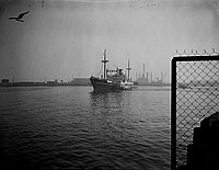 [Taiheyo Maru, California, November 27, 1950]