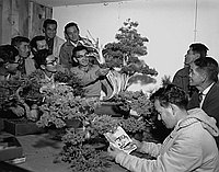 [John Naka teaching bonsai at home, California, November 1962]