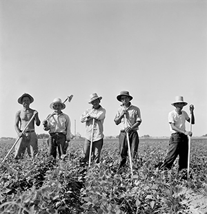 Laborers in sugar beet fields outside of Shelley, Idaho. Library of Congress, Prints & Photographs Division, FSA-OWI Collection, LC-USF34-073809-E.